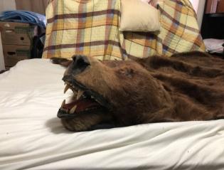 продам ковер из шкуры бурого медведя